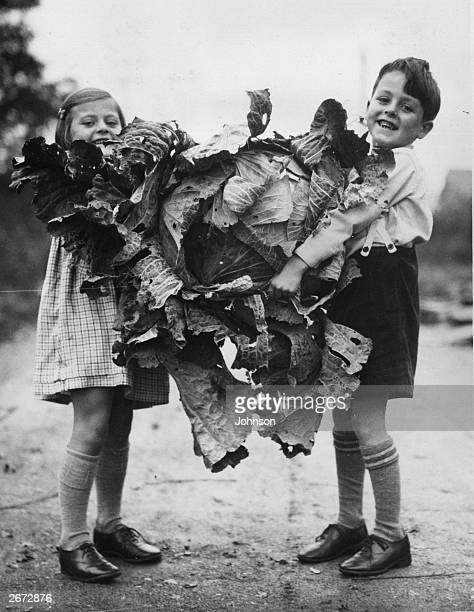44lb cabbage grown by J W Buckland of Oxford being carried by two children from an evacuee feeding centre to whom it was given.