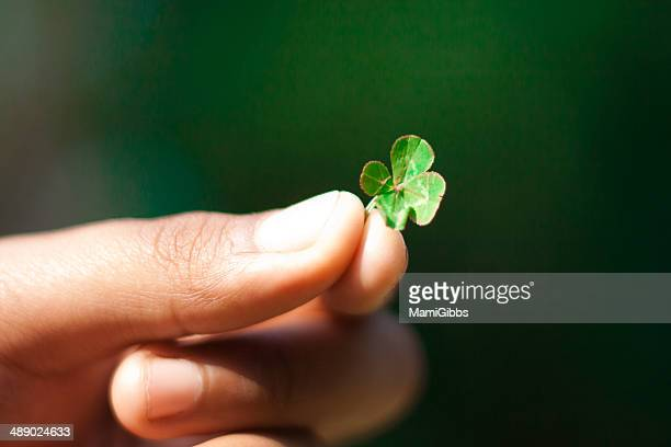 4-leaf clover - 4 leaf clover stock-fotos und bilder