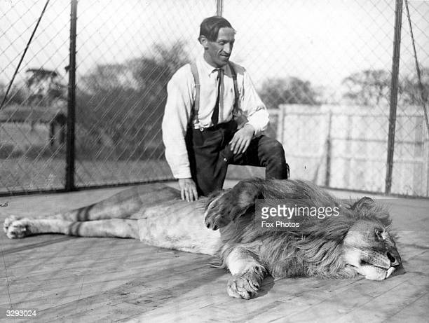 Blick the lion tamer at work at Chessington Zoo during a special demonstration with Rabin the lion for the film 'What The Stars Foretell' which Mr...