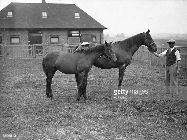 'Dawn Wind' with her foal by 'Tetratema' owned by John A Dewar at Ashurst Wood near East Grinstead