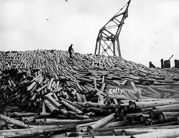 Large pile of logs at Cardiff dock waiting to be sent to various collieries as pit props.