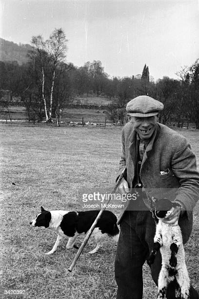 Shepherd John MacKenzie of Canghowan Farm Scotland grasps a lamb firmly by the neck as he walks through a field with his sheepdog Spank Original...