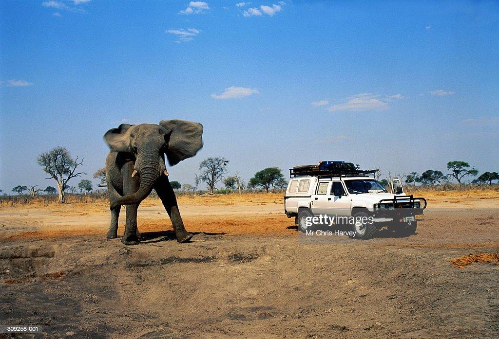 4x4 car next to African elephant, Savuti, Botswana : Stock Photo