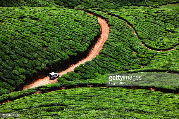 4x4 vehicle traveling through tea plantation, kerala, southern india - hugh sitton india stock pictures, royalty-free photos & images