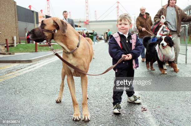 Year-old Oscar Halpin arriving at the NEC with Great Dane Amber, one of the entrants, on the first day, 9th January 1991.