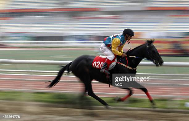 Meter horse racing is held on September 16, 2014 in Diqing Tibetan Autonomous Prefecture, Yunan province of China. Horse racing is a traditional...