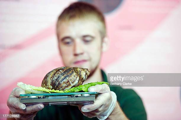 A 500g Giant African Land Snail on the scales at London Zoo on August 21 2013 in London England The height and mass of every animal in the zoo of...