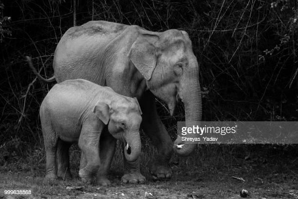 500px Elephant and Calf Bandipura