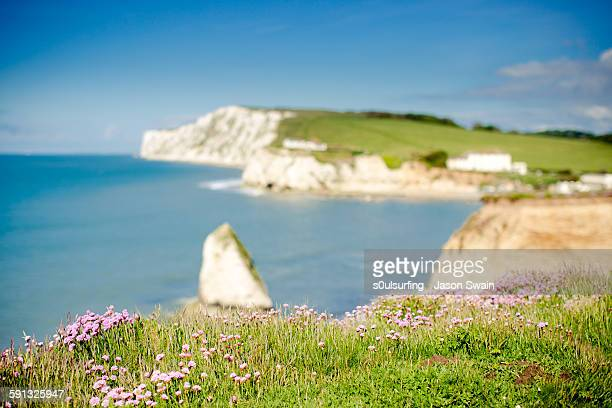50mm of freshwater bay pinks - s0ulsurfing stock pictures, royalty-free photos & images