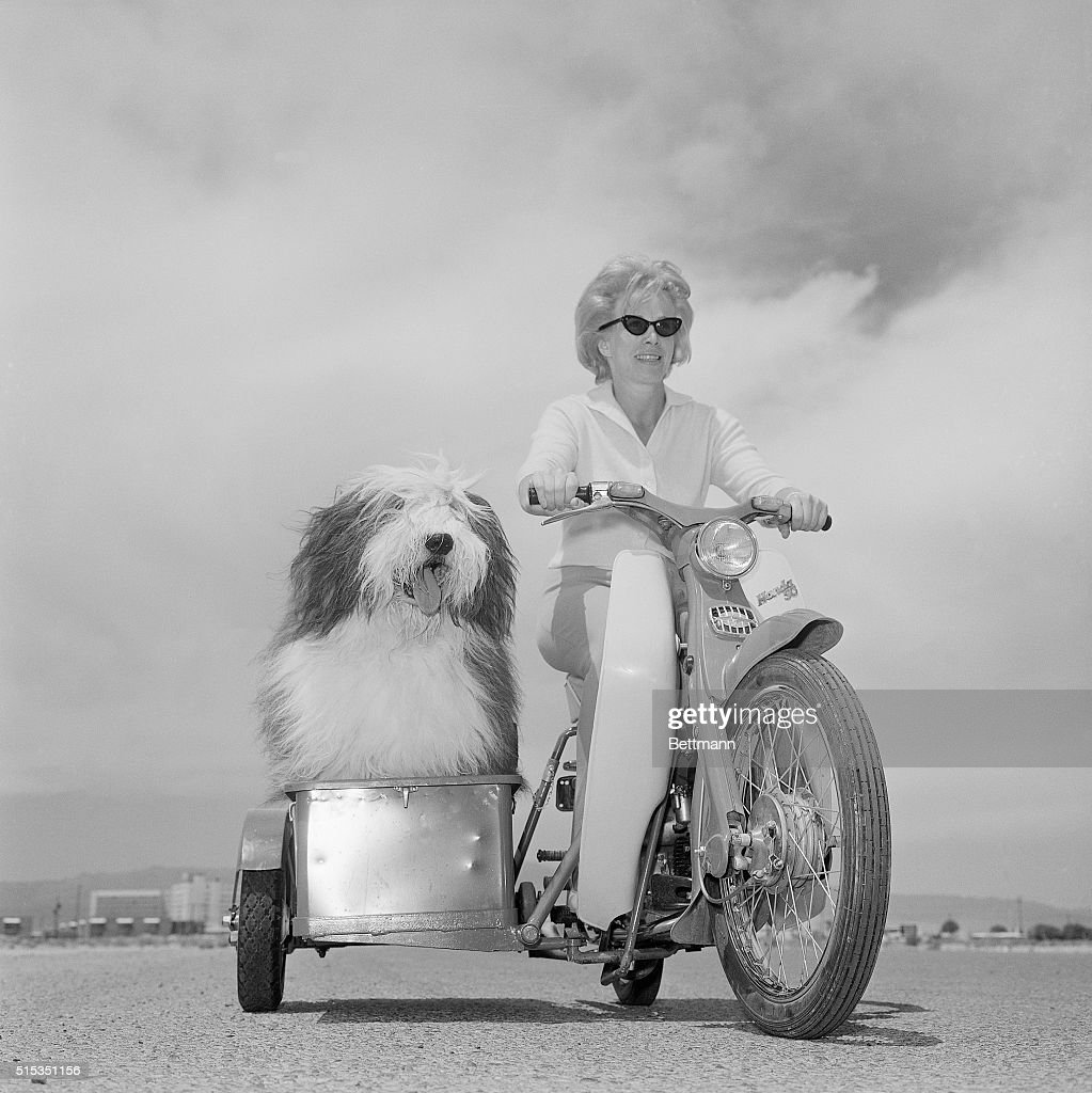 Las Vegas, NV- People may think they're the smartest animals in the world, but this English sheep dog, 'Zero Zero' by name, appears to be having the last laugh as his pretty mistress drives him around Las Vegas, Nevada in his own special sidecar. With all that hair in his eyes, 'Zero, Zero' can't see where he's going -- but he really doesn't care.