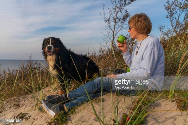 55-years-old mature active, attractive woman with her dog, zennenhund, sitting on a seashore on a sandy dune which grew with dogrose, in the sunny autumn day, and drinking a tea. - 55 59 years stock pictures, royalty-free photos & images