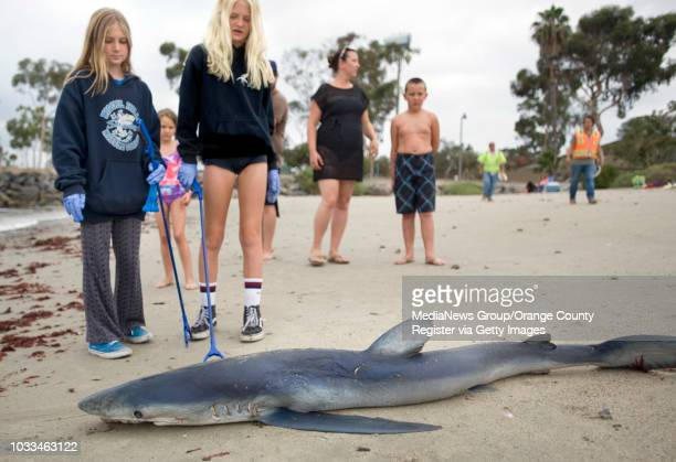 A 5foot Thresher Shark found dead and bobbing in the water at Doheny State Beach was pulled to shore by cleanup volunteer Robert Anderson Lauren...
