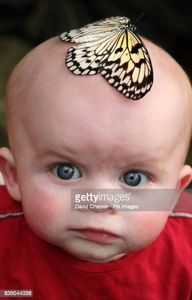 5monthold Daigan Frazer reacts as a Tree Nyniph butterfly lands on his head during a visit to Butterfly World near Edinburgh