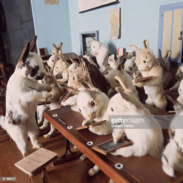 Victorian stuffed animals created by taxidermist Walter Potter at Potter's Museum of Curiosity in Bolventor Cornwall Potter created tableaux based on...