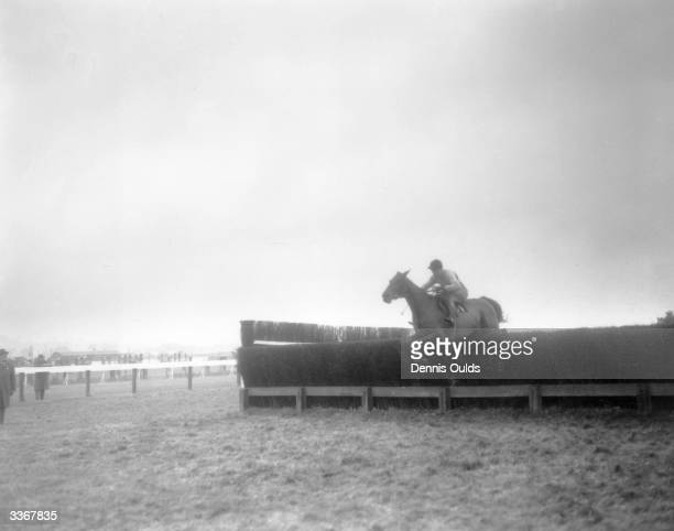 The champion Irish steeplechaser 'Arkle' ridden by Peter Taafe jumps the final fenceto win the Hennessey Gold Cup at Newbury