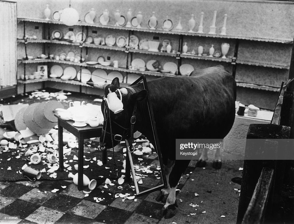 Bull In A China Shop : News Photo