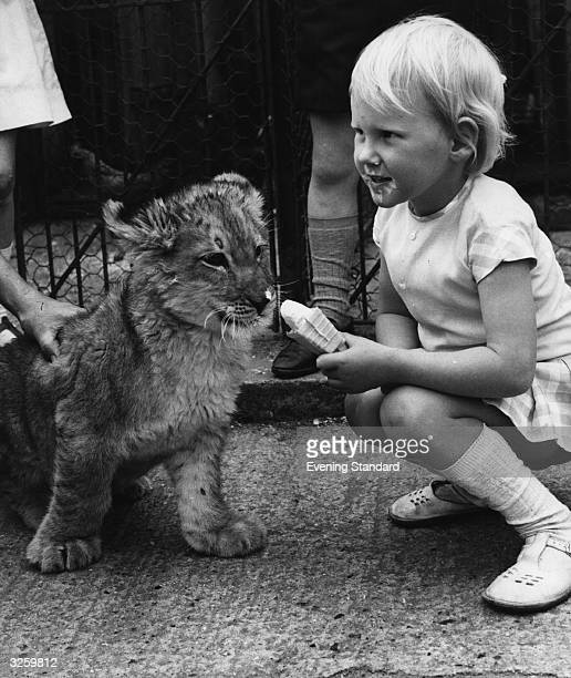 Hayley Mills feeds her icecream cone to a lion cub at Chessington Zoo