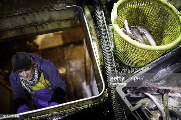 A 60yearold apprentice fisherman climbs out of a boat hatch beside a crate of dog fish that will be used as crab bait aboard the Harvest Reaper...