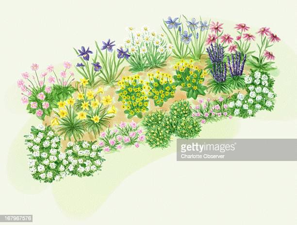 67p x 51p Brenda Pinnell color illustration of perennial plants for a sunny garden