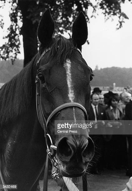 Hunt's racehorse 'Dahlia' after winning the King George VI and Queen Elizabeth stakes at Ascot. The filly won prize money totalling more than $1.5...