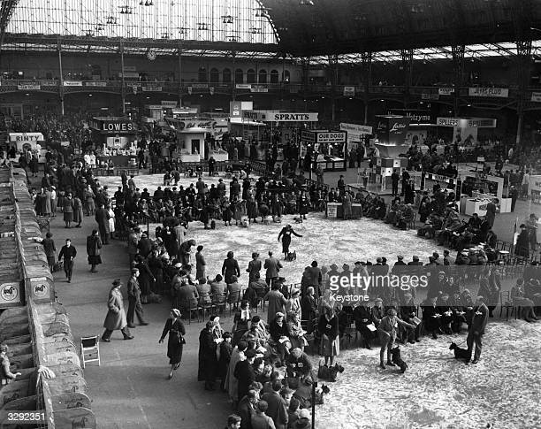 General view of Cruft's Dog Show at Olympia during the judging on the first day.