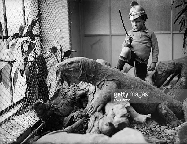 A little boy plays St George with a Komodo dragon at London Zoo Komodo dragons from the monitor lizard genus are the largest living lizards