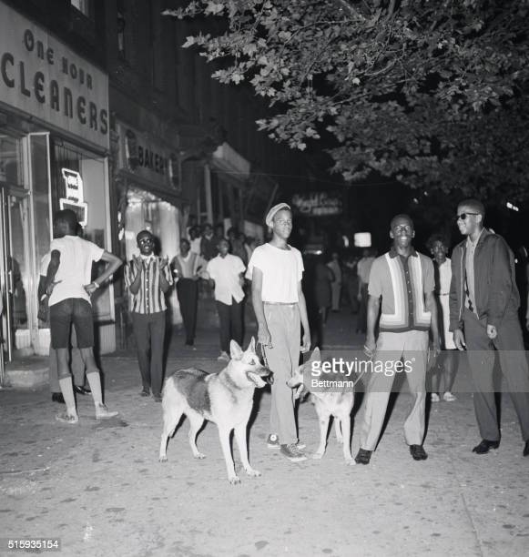 7/19/1964New York NY Young Negroes stand with police dogs which they hope will afford them some protection in Harlem where riots raged for the second...