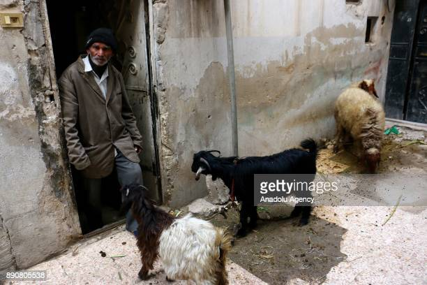 72yearold Pakistani man Mahmoud Fadil Ekrem who was isolated at Syrias Eastern Ghouta which is under blockade by Assad regime feeds animals in front...