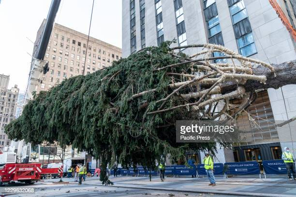 Foot Christmas Tree from Oneonta is being installation at the Rockefeller Plaza. The Christmas Tree has been donated by Daddy Al's General Store in...