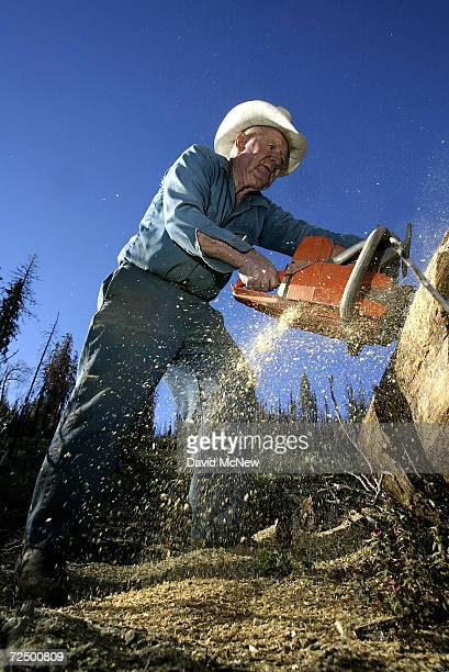 78yearold Jack Morgan who has been a wood cutter since retiring 16 years ago rips a log burned in the massive McNally fire of July 2002 on July 30...