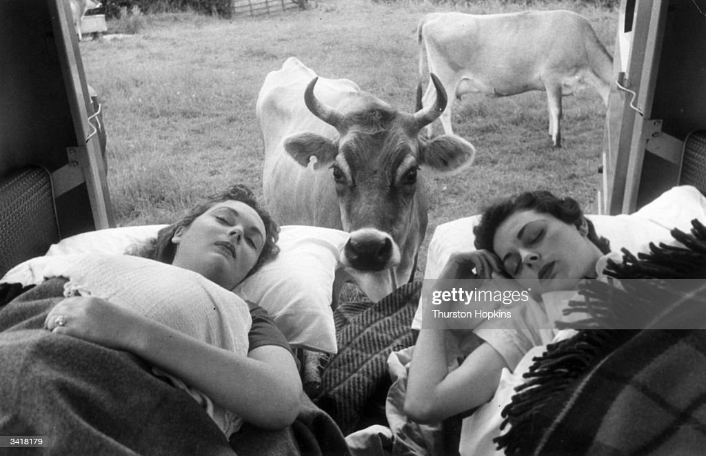 Two young women asleep in a Dormobile are about to be awoken from their slumber by a curious cow. Original Publication: Picture Post - 7233 - Two Girls And A Sleeper Van - pub. 1954