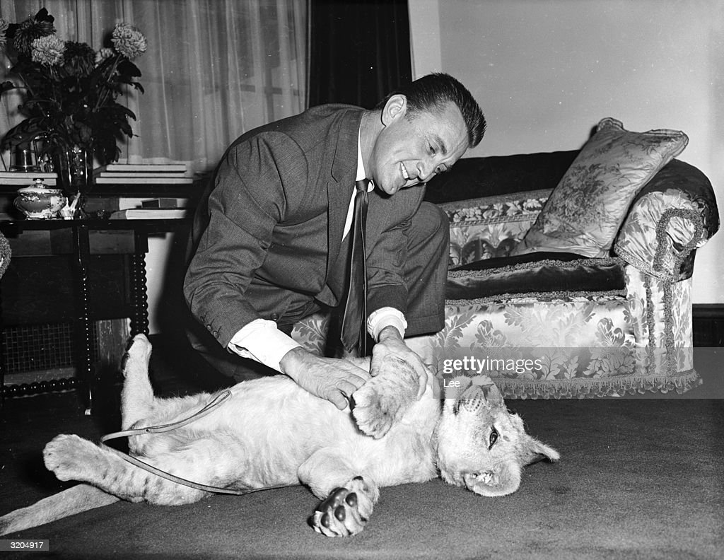 American film star Kirk Douglas with a lion cub called Spartacus which was presented to him by the director of Southport zoo in appreciation of Douglas' film role.