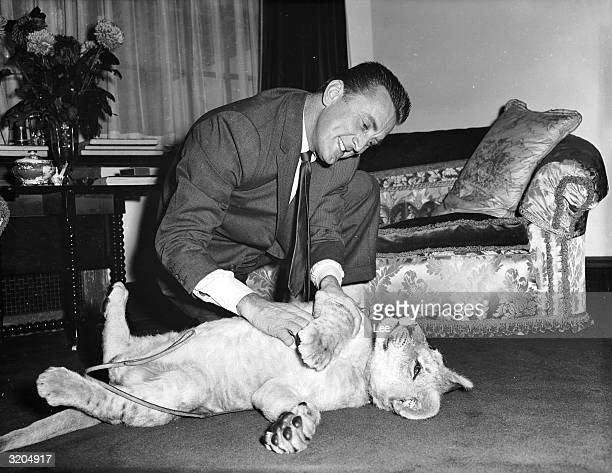 American film star Kirk Douglas with a lion cub called Spartacus which was presented to him by the director of Southport zoo in appreciation of...