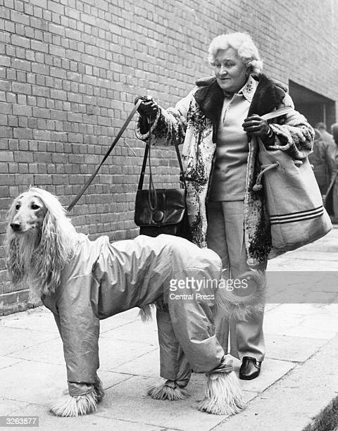 Eileen Snelling from Reading brings her Afghan Hound to the Crufts Dog Show at the Olympia Stadium.