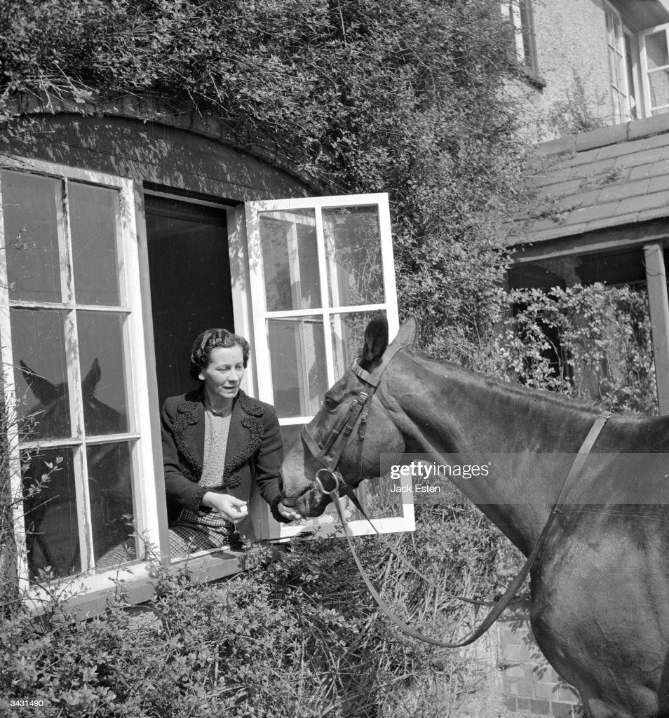 Retired Racehorse : News Photo