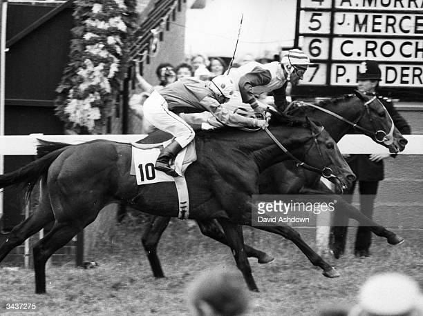 Flat race jockey Greville Starkey wins the English classic Epsom Derby race on Shirley Heights in second place is Hawaiian Sound