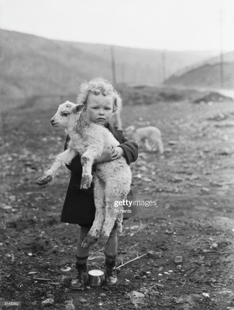 Wee Pet Lamb : News Photo