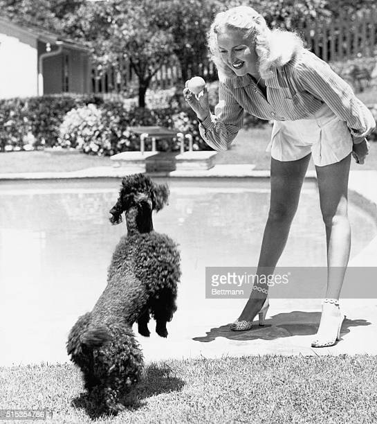 8/19/1944Hollywood CA Vivacious Betty Grable a MAMMA for five months pomps with this frisky poodle as she gets back in the grove on her return to the...