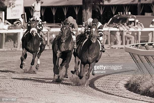 8/19/1978Saratoga NY Affirmed and Alydar in another of their furious match races are neck and neck in the fourth turn at Saratoga Race Track during...
