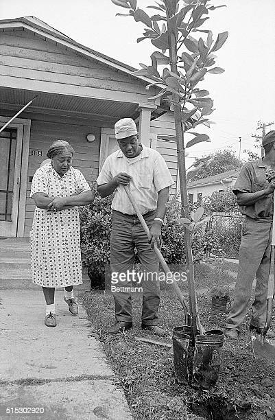8/21/1967Los Angeles CA This year near the scene of the 1965 Watts riots there wasn't any damaging rampages but instead a 'paintin' 'plantin'...