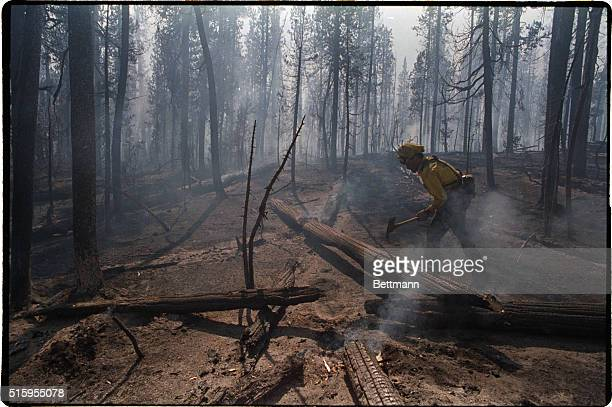 8/30/1988Yellowstone National Park WY Firefighter Kim Desiato of Tucson Arizona stops to look for hot spots in the aftermath of the Lewis Lake fire...