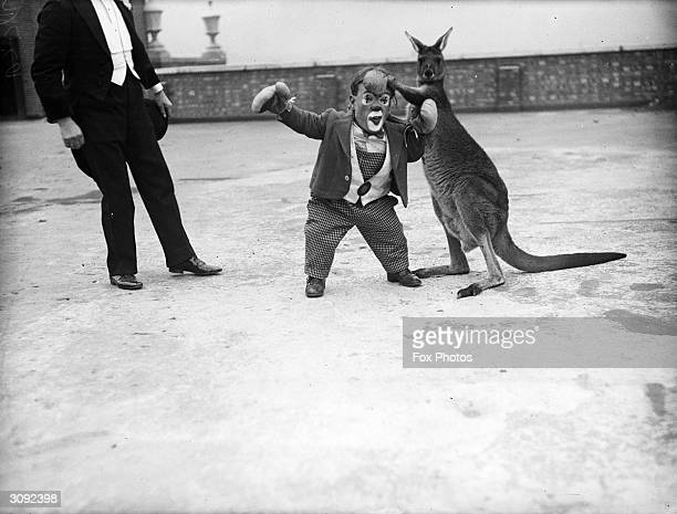 Six Foot a midget circus performer tries a practice round with a boxing kangaroo before a show at KingstononThames