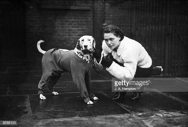 Miss D Bush arriving with her Dalmatian at Islington for the Cruft's Dog Show at the Royal Agricultural Hall London