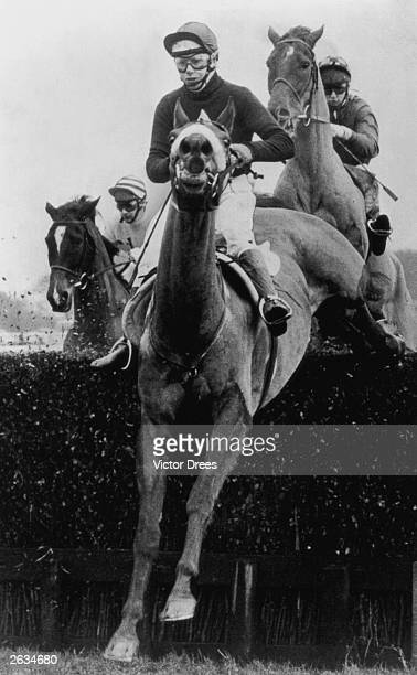 Red Rum the only horse to win the Grand National three times baring his teeth as he clears a fence at Haydock
