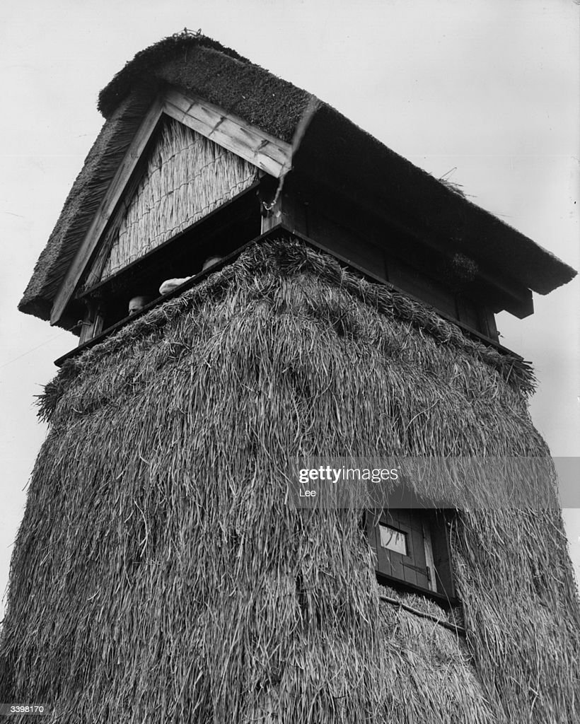Sedge Thatched Hide : News Photo