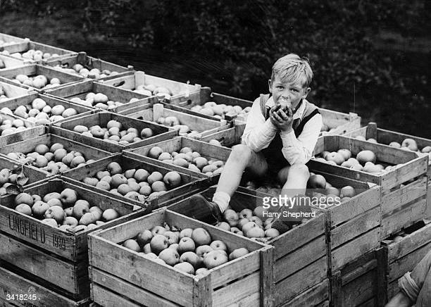 A child eating an apple whilst sitting on a truck loaded with them