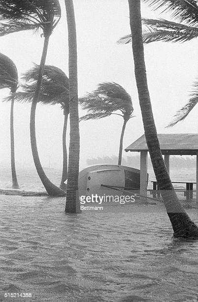 9/11/1960Miami FLA sailboat lies on its side near the Miami waterfront as 90mileperhour winds pass through the palm trees Miami's in the throes of...