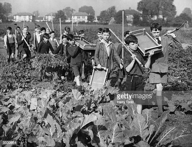Schoolboys from the Drury Falls Council School at Hornchurch arriving at their allotment. They run a shop where they sell the produce they have...