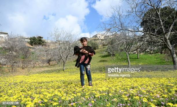 A 9yearold kid Meryem Bakir poses for a photo with her goat as she walks around freely after returning to her house with her family members in Omer...