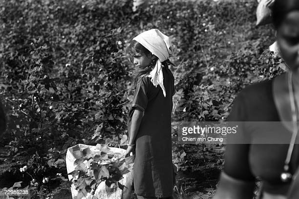 9yearold Radhiaka rests from picking cotton on November 11 2006 in Warangal Andrah Pradash India Cotton pickers most women and children make about...